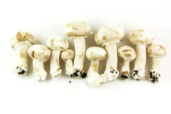 Champignons Stock Photography