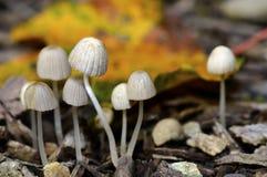 Champignons/champignons Image libre de droits