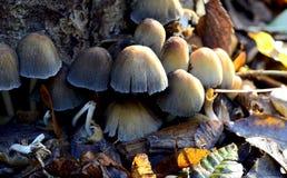 Champignons/champignons Images stock
