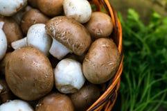 Champignons, champignons dans le panier sur l'herbe verte Photos libres de droits