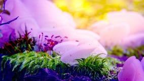 Champignons colorés Photographie stock