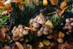 Champignons colorés d'automne photographie stock libre de droits