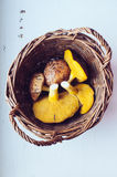Champignons comestibles Images libres de droits