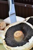 Champignons comestibles avec un couteau Images libres de droits