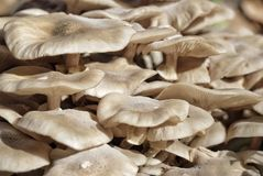 Champignons comme abackground Image stock