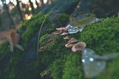 Champignons comme par magie animés sur le tronc d'arbre mort Photographie stock