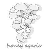 Champignons d'agaric de miel Groupe d'Armillaria sauvage de champignons Photographie stock