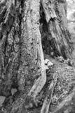 Champignons d'arbre forestier Photos stock