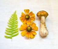 Champignons d'Aspen champignon d'Orange-chapeau d'isolement sur le fond en bois avec la fougère et les fleurs photos stock