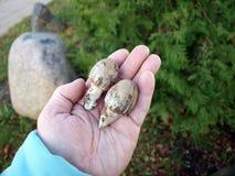 Champignons d'automne photographie stock