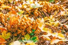 Champignons dans des feuilles tombées dans la forêt un matin ensoleillé d'automne photos stock