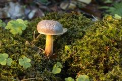 Champignons dans Flor forrest Image stock