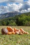 Champignons dans l'Espagnol Pyrénées Photo libre de droits
