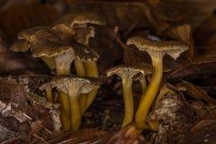 Champignons dans la broussaille Photos libres de droits