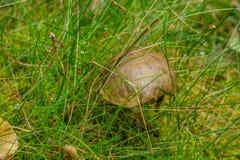 Champignons dans la forêt Photographie stock libre de droits