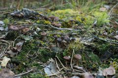 Champignons dans la forêt photos stock