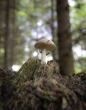 Champignons dans la forêt Photo stock