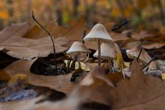 Champignons dans la forêt d'automne image stock