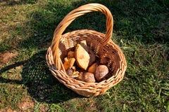 Champignons dans le panier Cueillette de champignon dans une forêt pendant l'automne en nature Un élevage non comestible de champ Photographie stock