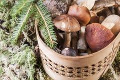 Champignons dans le panier se tenant sur la mousse dans la forêt Photographie stock
