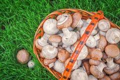Champignons dans un panier sur une herbe verte juteuse Photographie stock libre de droits