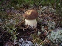 Champignons dans une forêt d'été Photographie stock