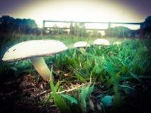 champignons dans une rangée Photos stock