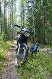 Champignons de baies de forêt de repos de trekking de sac à dos de moto sélectionnant le soleil Image libre de droits