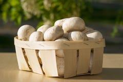 Champignons de champignon de paris Images stock