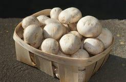 Champignons de champignon de paris Photos libres de droits