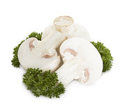 Champignons de champignon de paris d'isolement sur le blanc Images stock