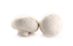 Champignons de champignon de paris d'isolement sur le fond blanc Images libres de droits