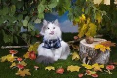 Champignons de chat dans la forêt Photos libres de droits
