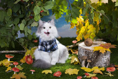 Champignons de chat dans la forêt Photographie stock