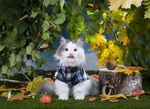 Champignons de chat dans la forêt Images stock