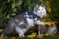 Champignons de chat dans la forêt Image libre de droits
