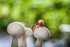 Champignons de chute sur un petit escargot Images libres de droits