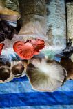 Champignons de couche Photo stock