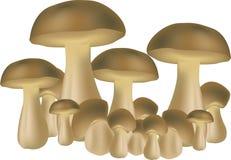 champignons de couche Photos stock