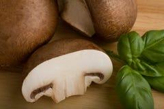 champignons de couche photo libre de droits