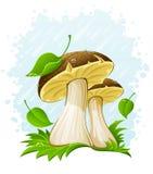Champignons de couche avec la lame verte dans l'herbe sous la pluie Image stock