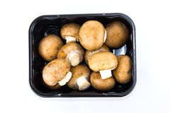 champignons de couche bruns Photos stock