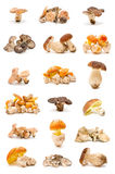 Champignons de couche comestibles images stock
