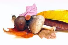 Champignons de couche comestibles. Images stock