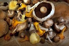Champignons de couche comestibles Photos stock