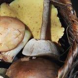 Champignons de couche comestibles sauvages Photographie stock