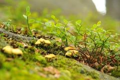 Champignons de couche dans une forêt Photo stock