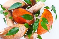 Champignons de couche de cèpe d'été (reticulatus de boletus) photo stock