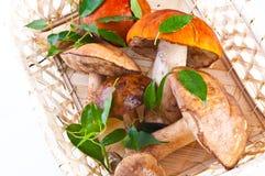 Champignons de couche de cèpe d'été (reticulatus de boletus) photographie stock libre de droits