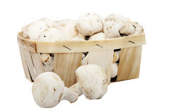 Champignons de couche de champignon de paris Photographie stock